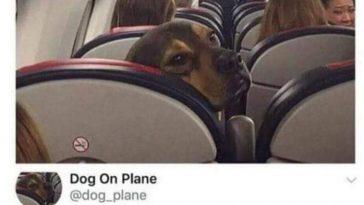 Pies w samolocie, Luknij.net - Śmieszne memy, zabawne obrazki, kawały, suchary